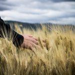 A person in a wheat field.
