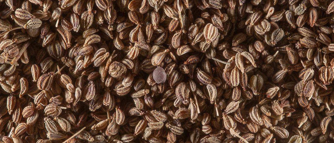 Apium graveolens seeds